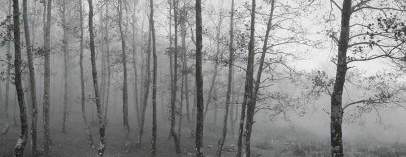 Pentti Sammallahti - Partie 4 dans Photographie: Grands Photographes